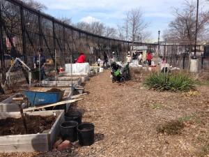 2014 BC Gardening Season